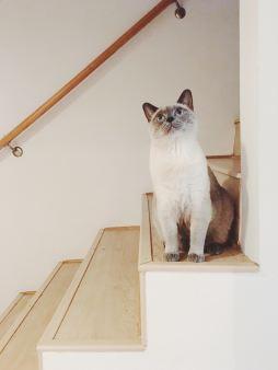Kiki, Stairwell.